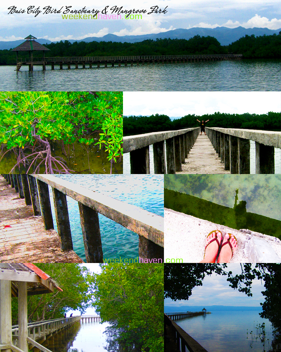 Bais City Bird Sanctuary & Mangrove Park